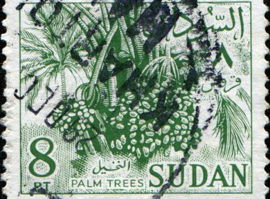 sudan-palms